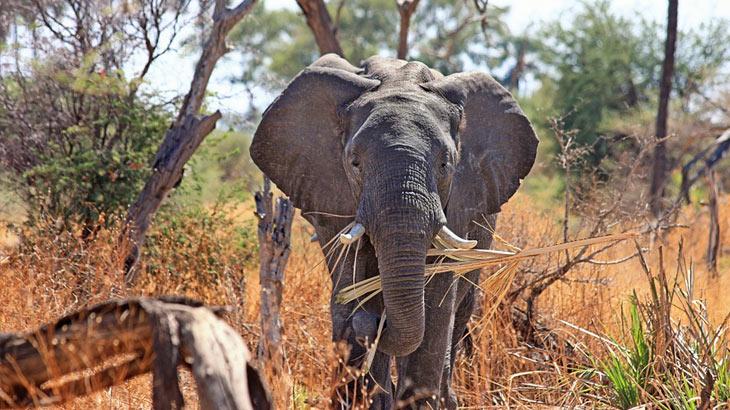 zuid-afrika-reizen